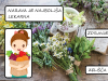 domen_klavs_8b_narava_lek
